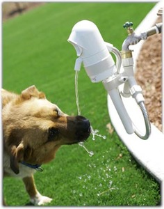 Whoot_contech-waterdog-dogdrinking